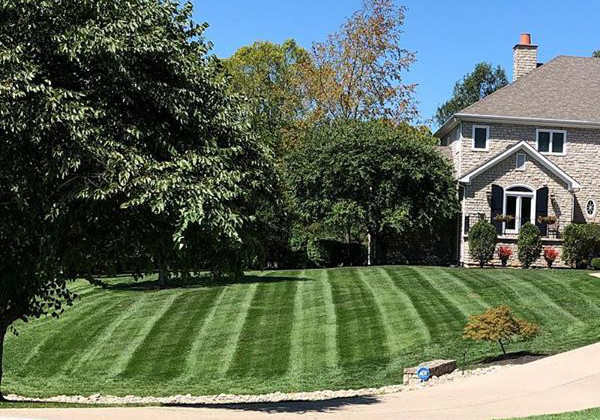 Front yard mowing
