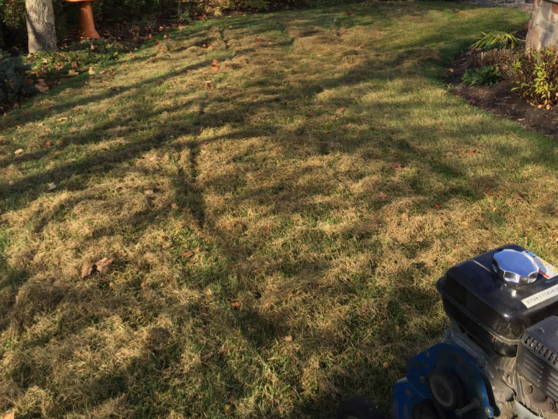 backyard lawn dethatching
