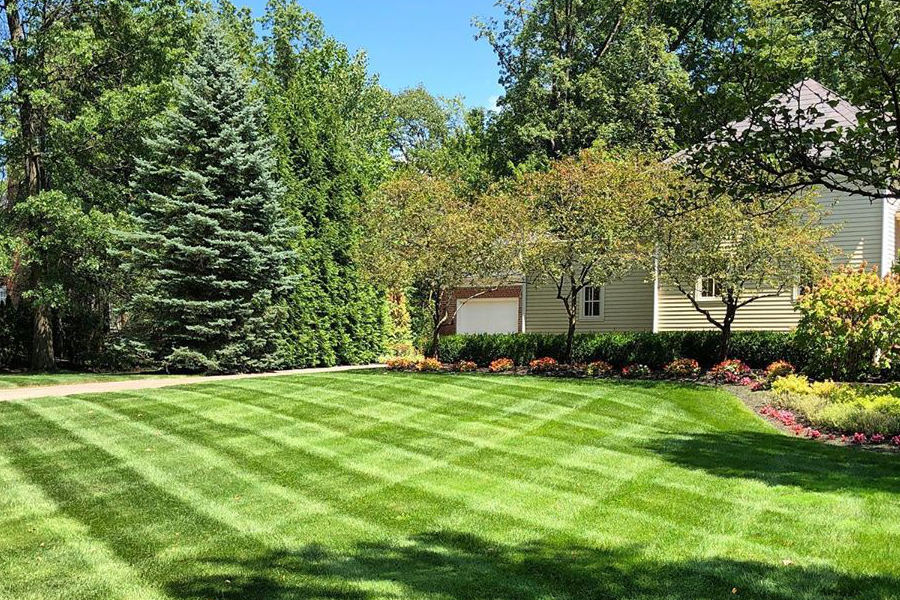 Lawn mowing stripes in residential property.